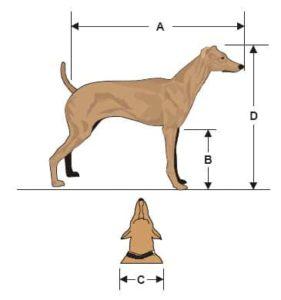 mudando com cachorro grande para o canadá: medindo o cachorro